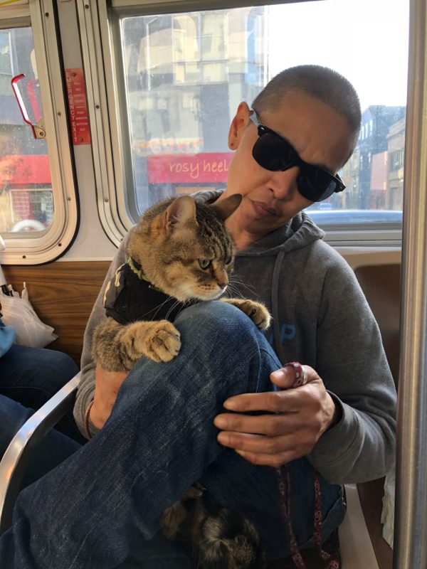 Person Holding Cat On MUNI Bus