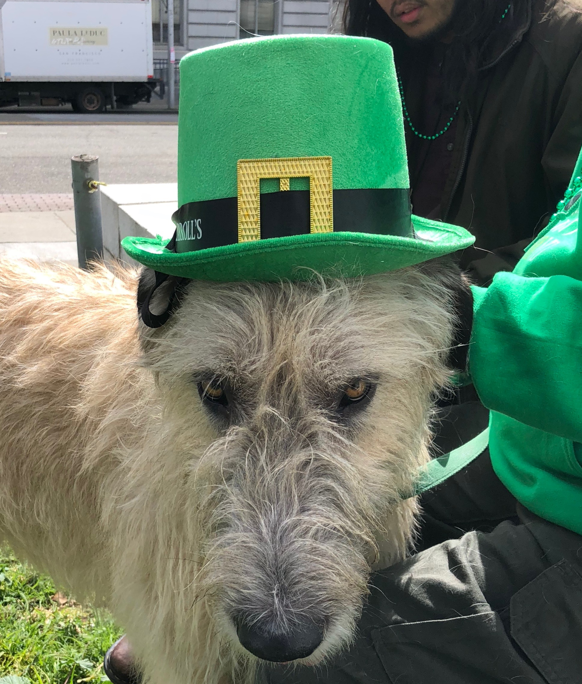 Irish Wolfhound With St. Patrick's Day Leprechaun Hat On His Head
