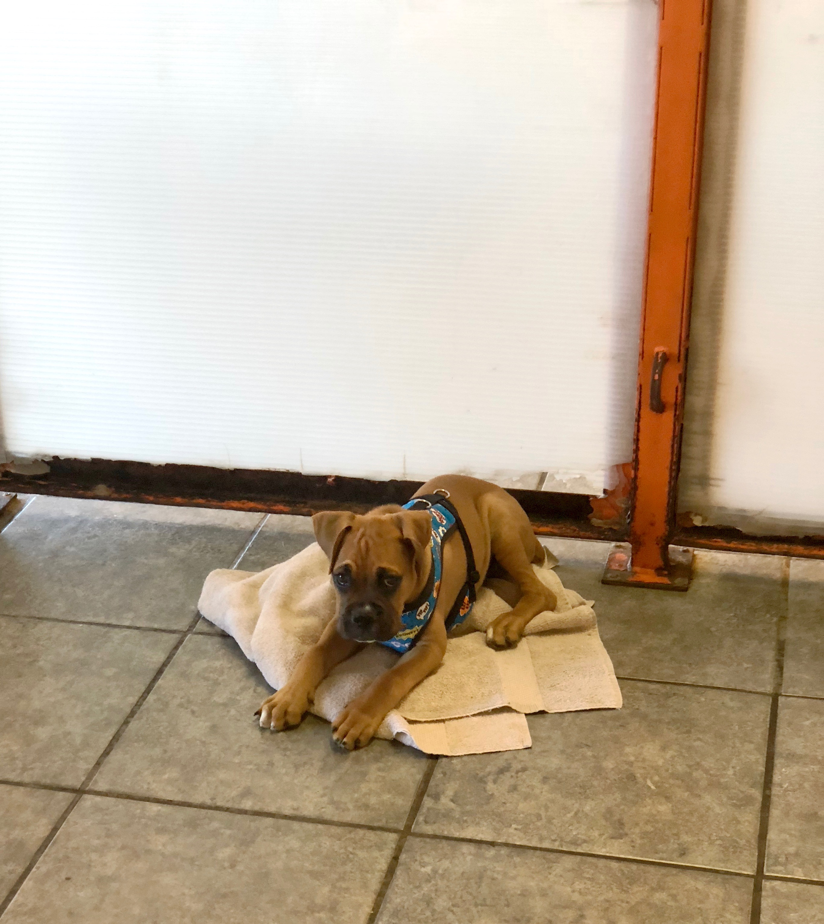 Boxer Puppy Lying On A Towel