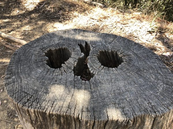 Tree Stump With Face In It