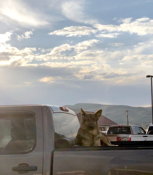 German Shepherd In The Back Of A Pickup Truck Under A Gorgeous Sky