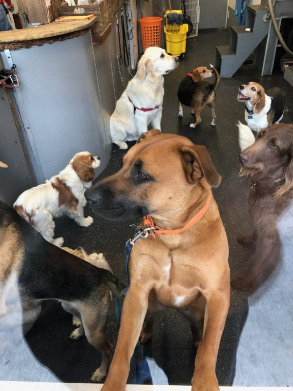Gaggle Of Dogs At A Grooming Parlor