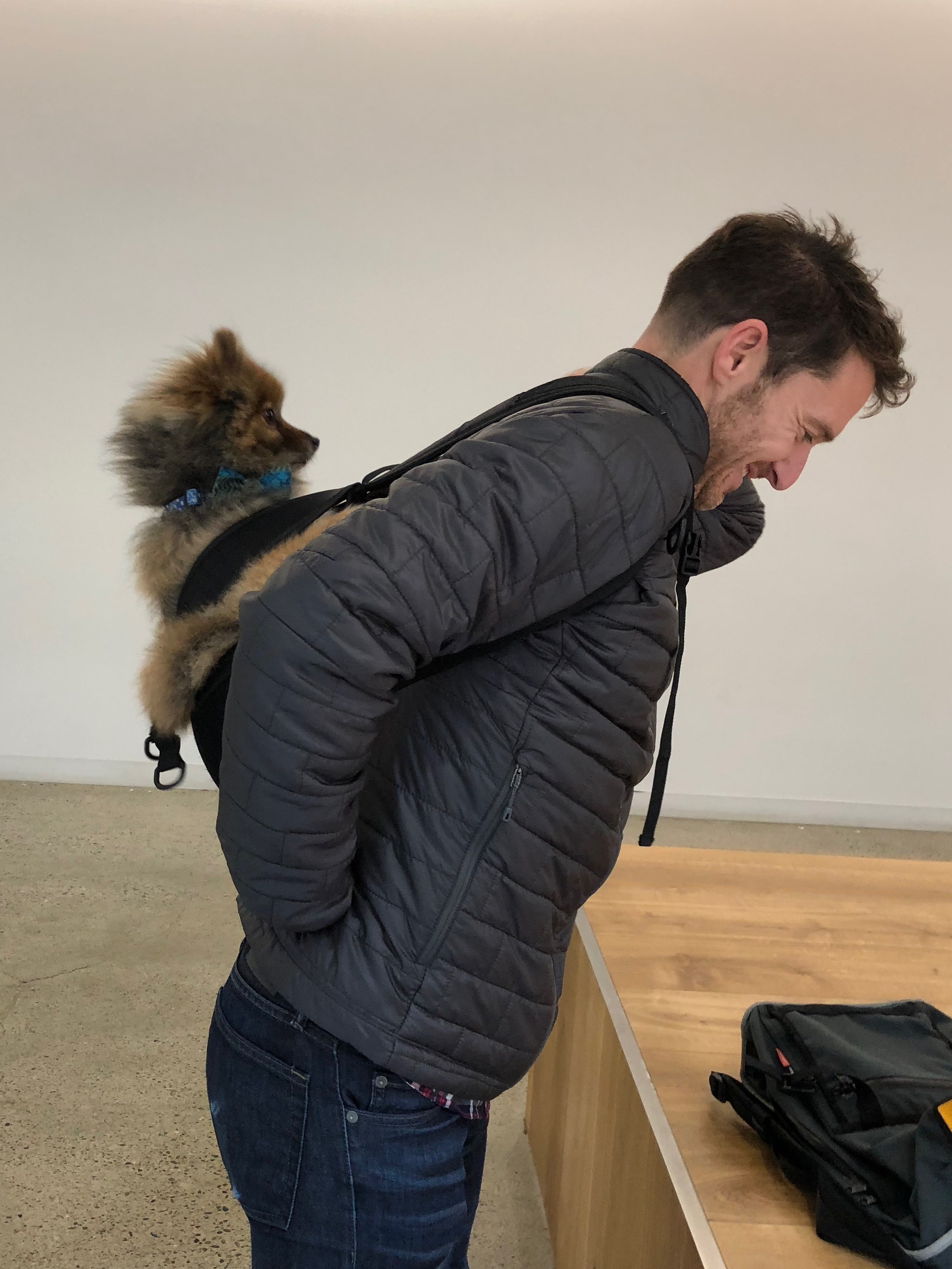 Man With Pomeranian Strapped To His Back