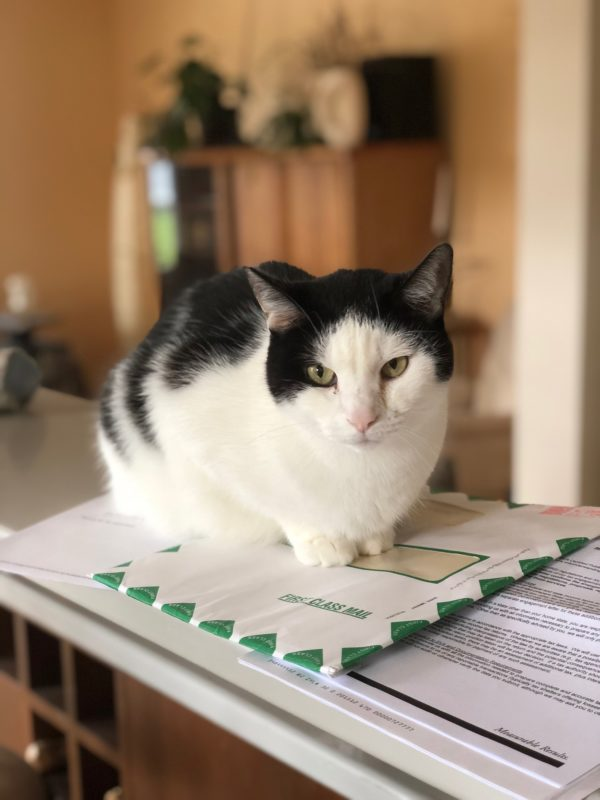 Black And White Piebald Cat Sitting On Mail