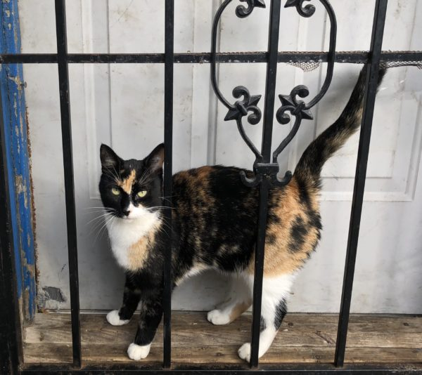 Calico Cat Behind Wrought Iron
