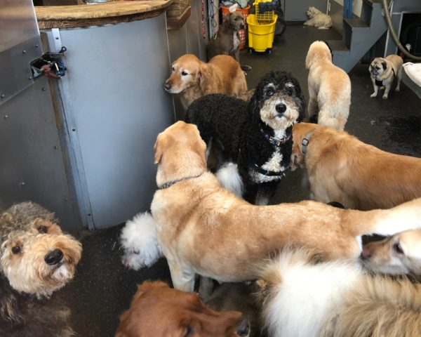 Giant Gaggle Of Dogs In A Dog Grooming Parlor