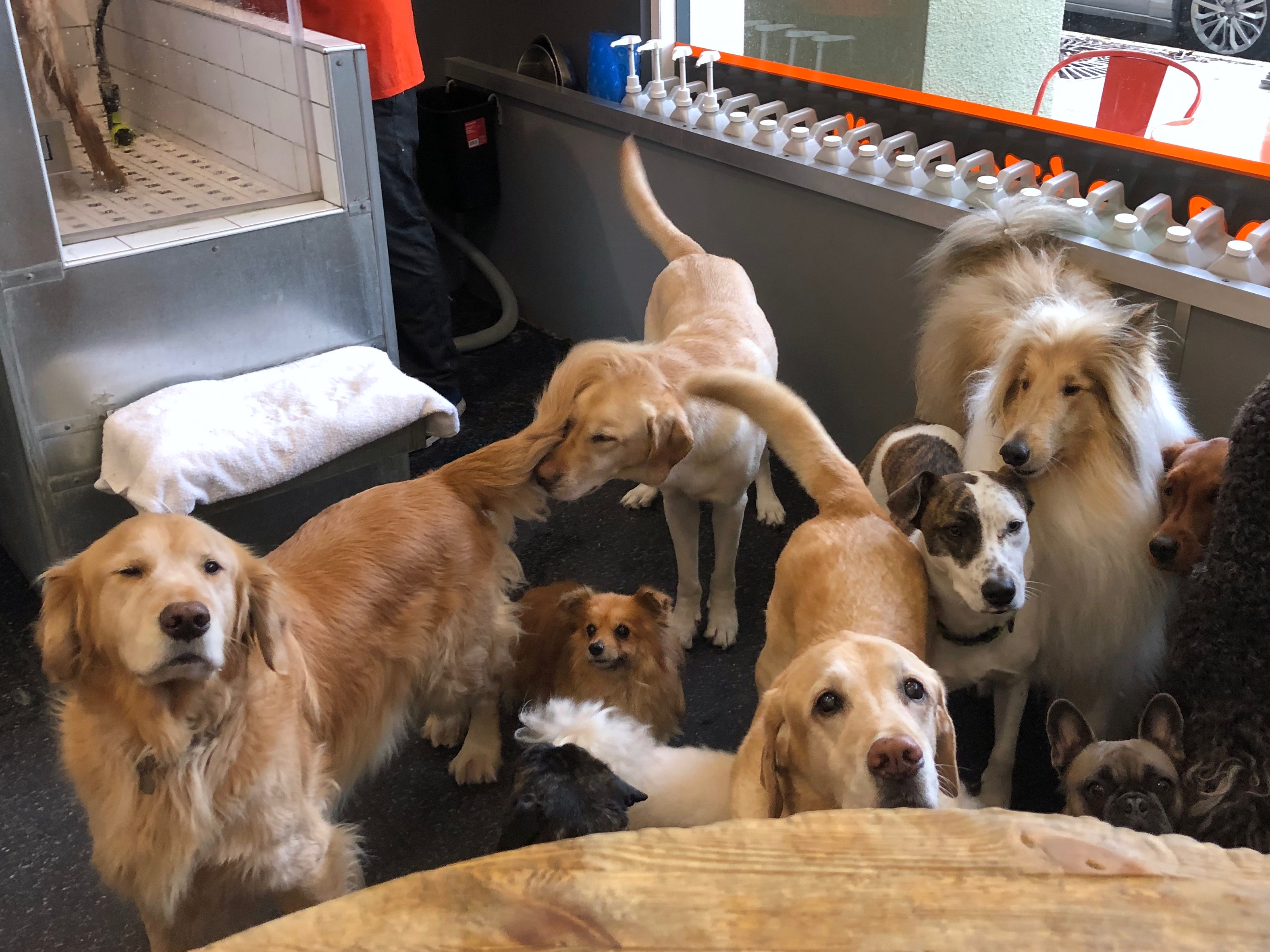 Gaggle Of Dogs
