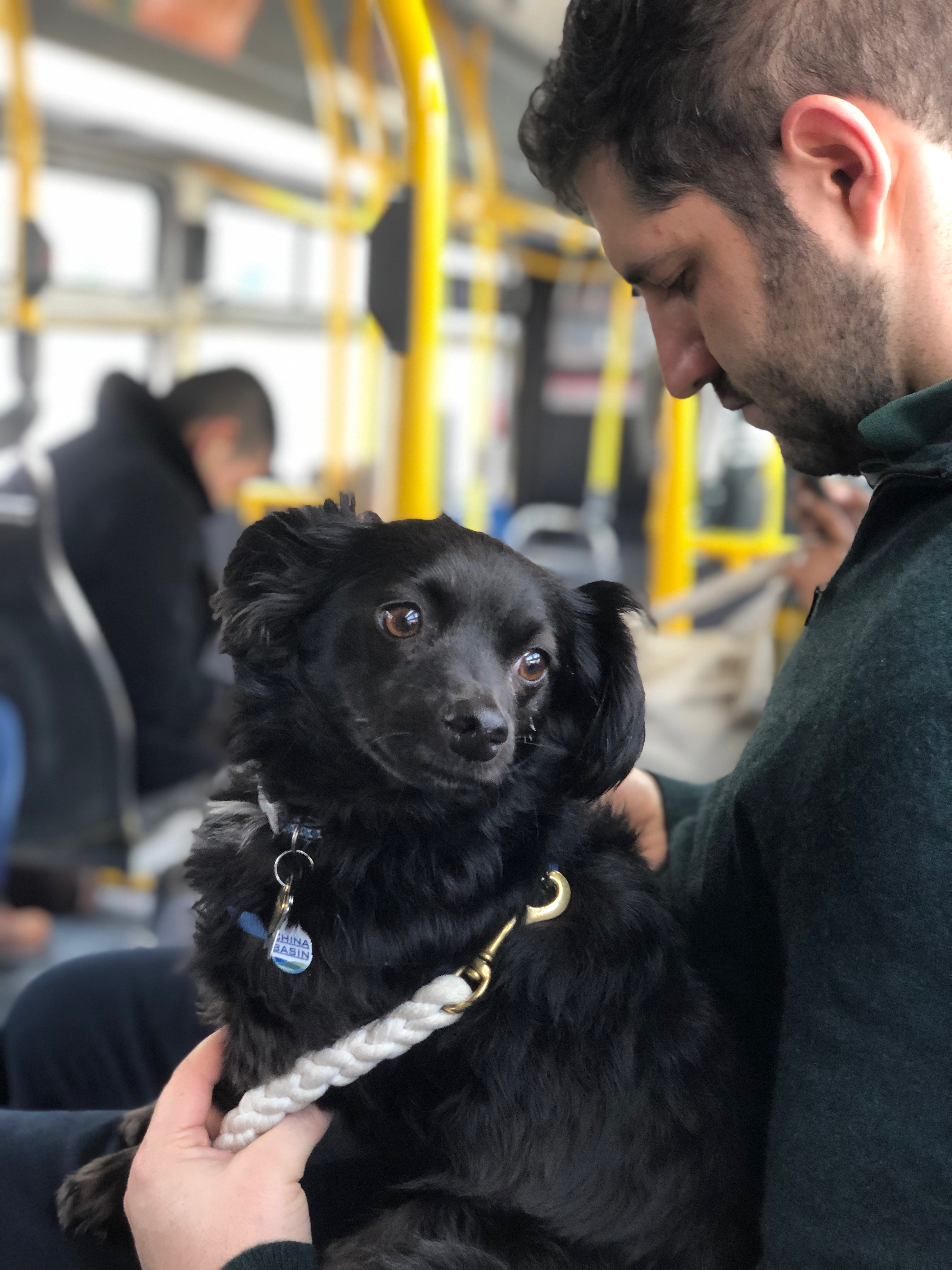 Man With Fluffy Pup In His Lap