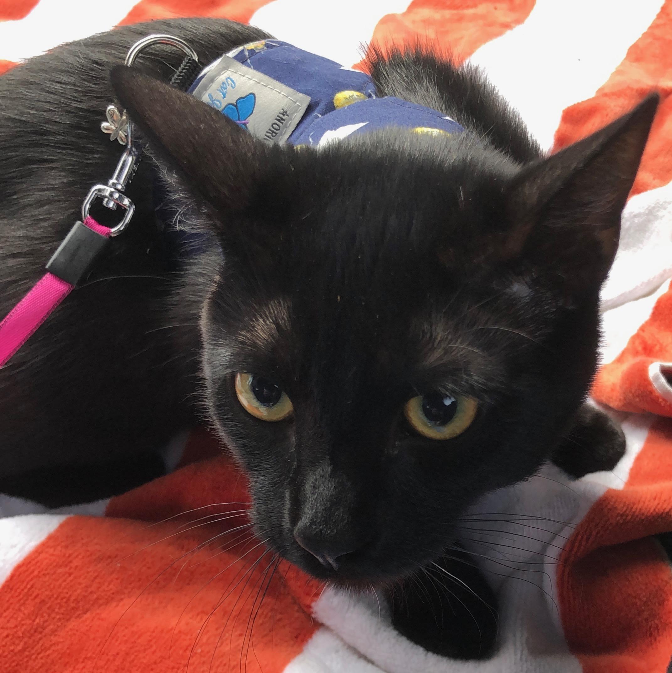 Black Cat Looking Curious