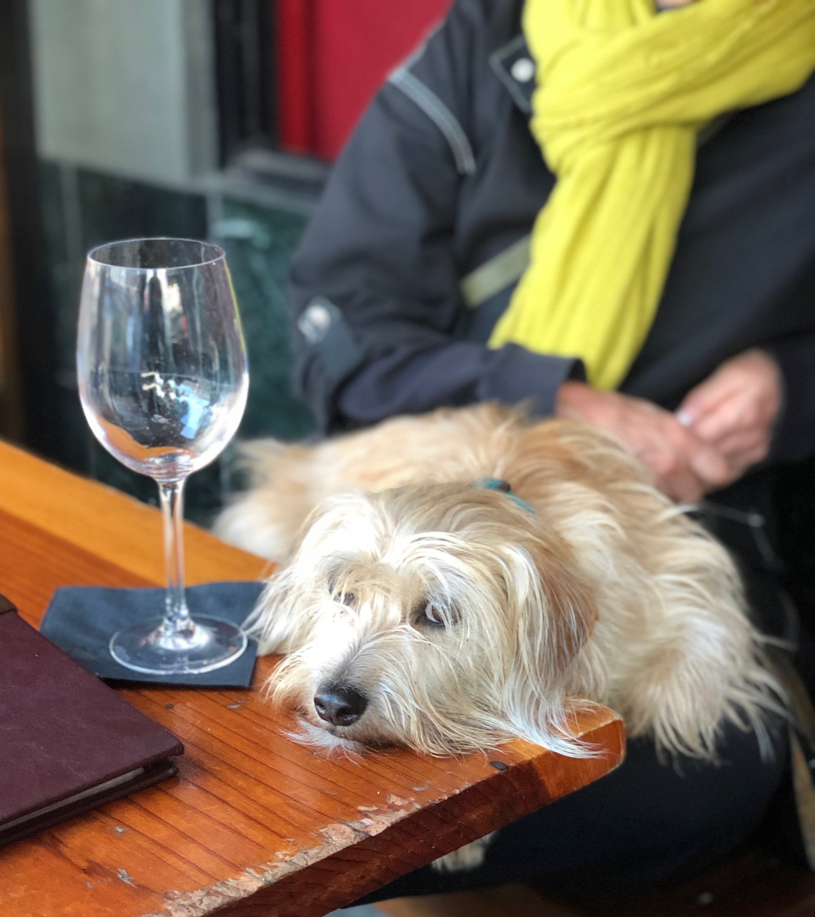 Pooped Pup Next To Empty Wine Glass