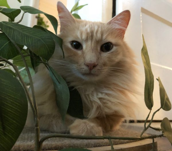 Tiger Tabby Cat Hiding In Artificial Plant