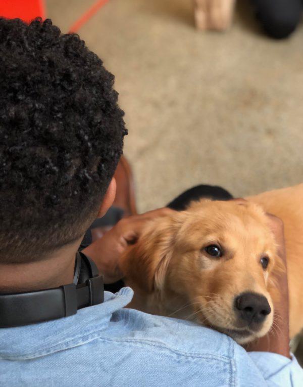 Man Hugging Holden Retriever Puppy