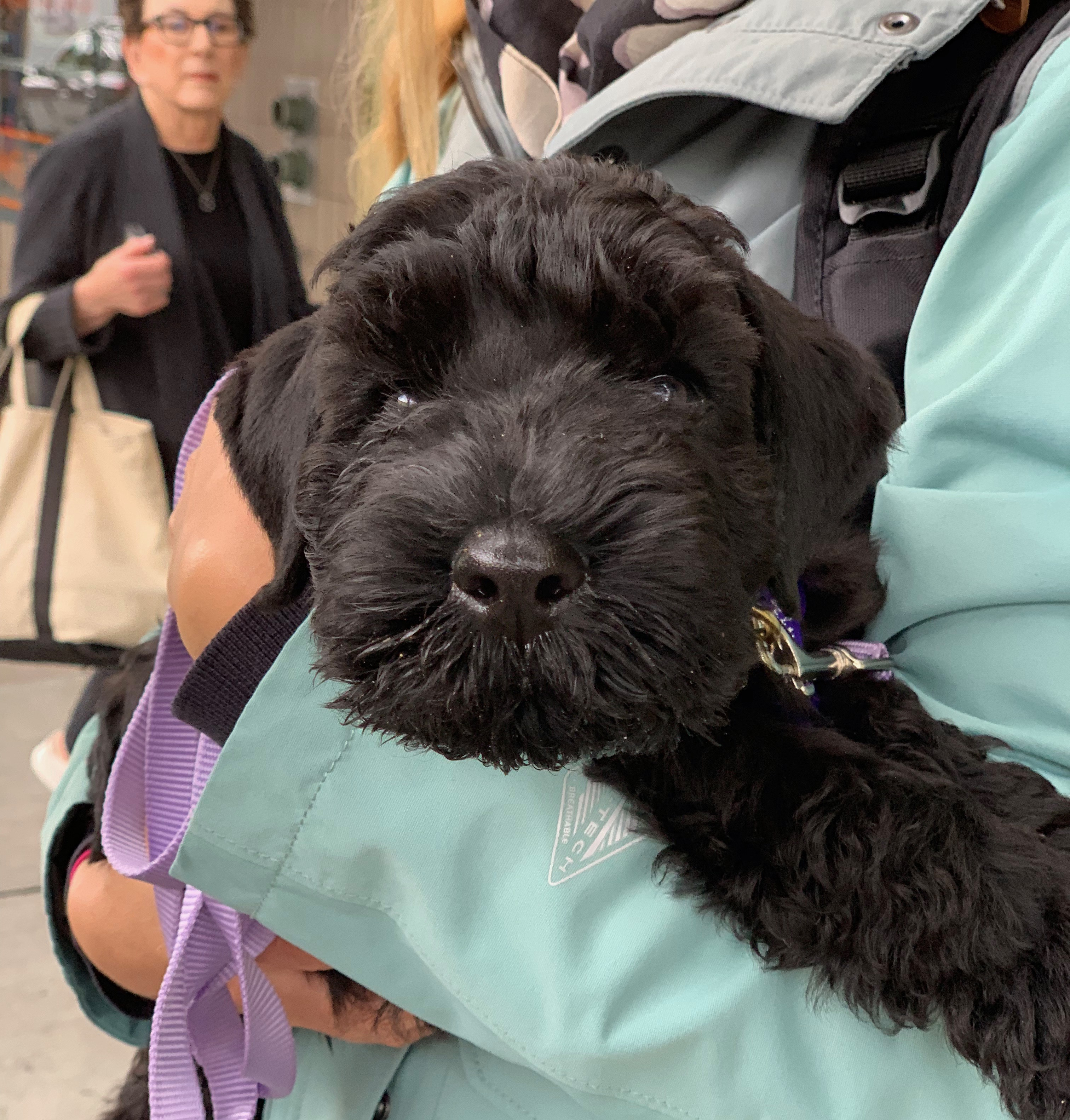 Woman Holding Black Schnauzer Puppy