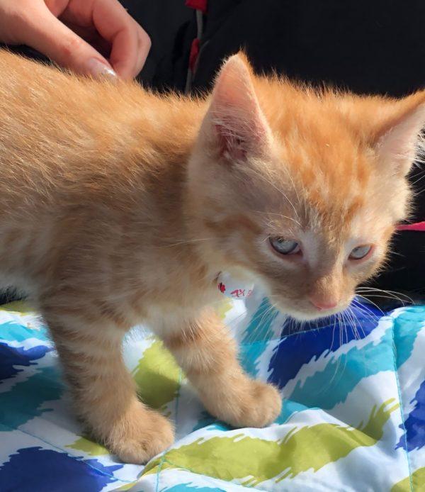 Marmalade Kitten Giving Side-Eye
