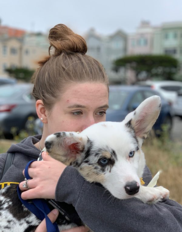 Woman Holding Blue Merle Cardigan Welsh Corgi
