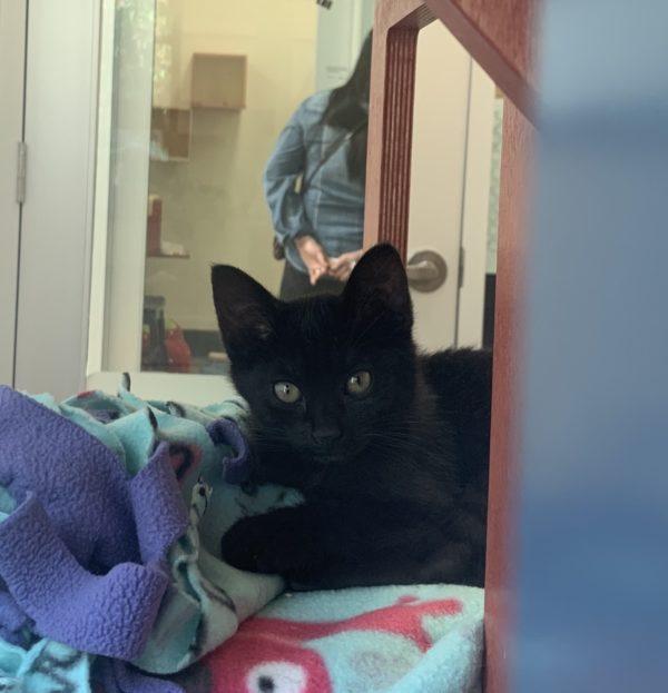 Black Kitten On A Blanket