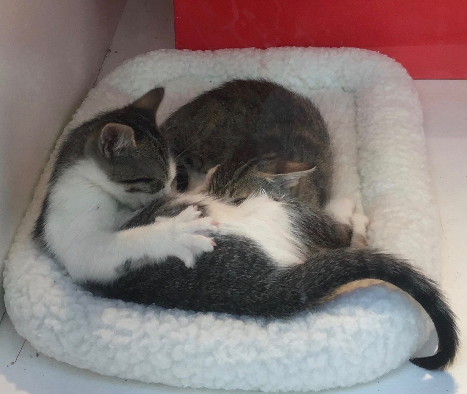 Two Kittens Sleeping On A Cat Bed