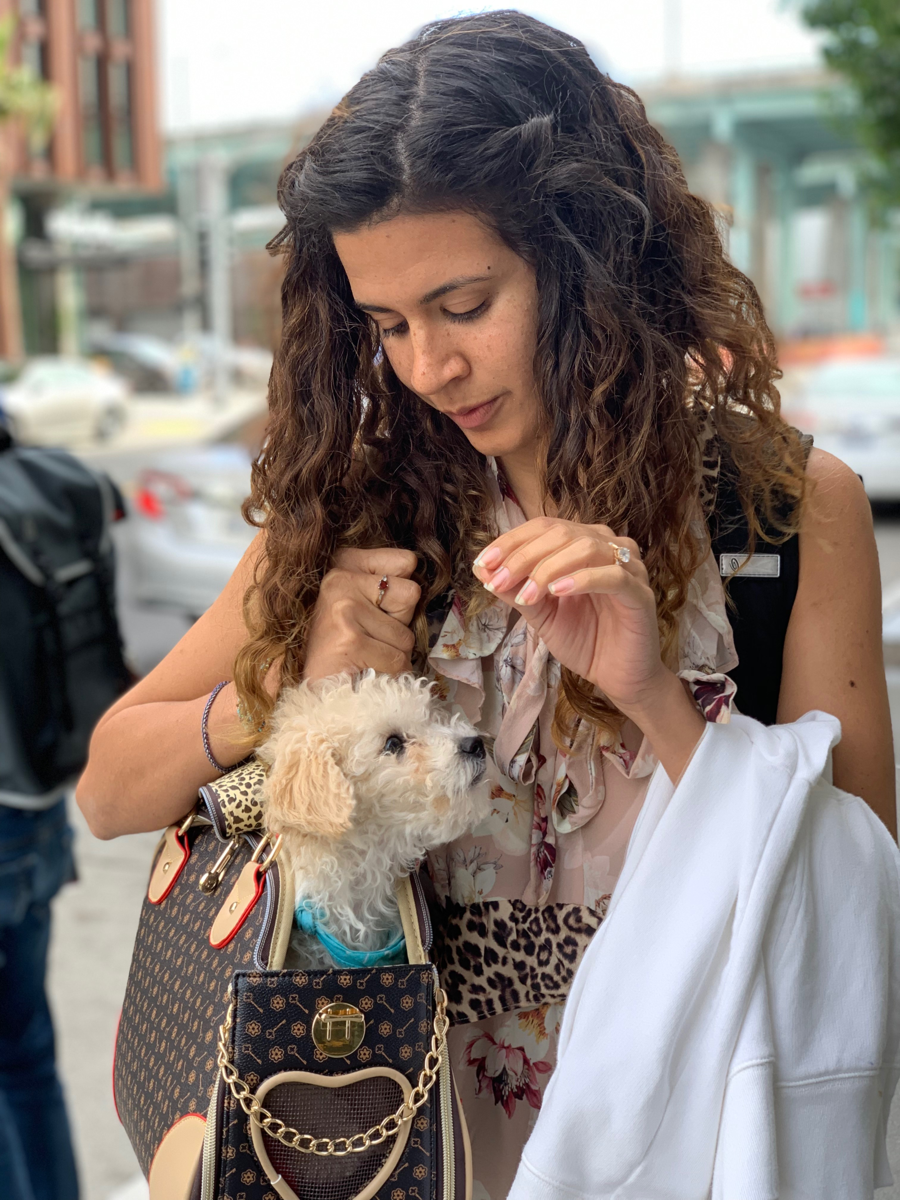 Woman With Cocker Spaniel Poodle Mix Puppy In Bag