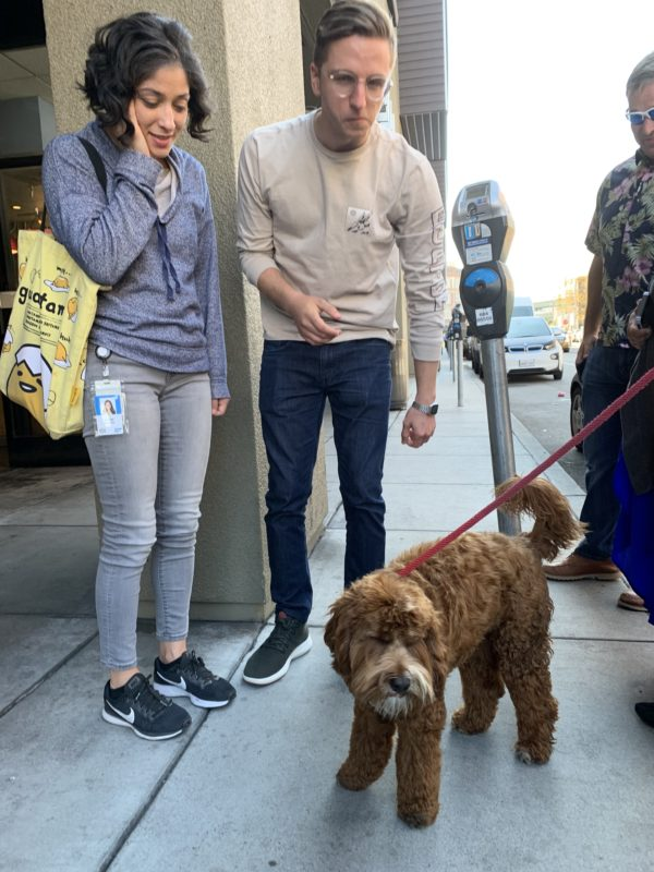 Two People Staring At A Labradoodle