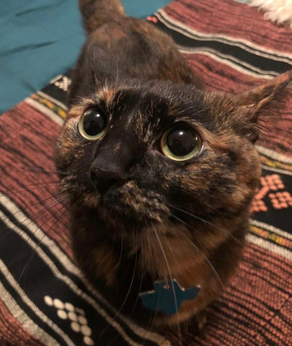 Tortoiseshell Kitty