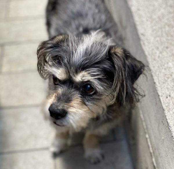 Scruffy Terrier Mix Looking Winsome