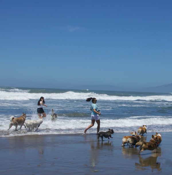 Two Women And Lots Of Dogs Running On Ocean Beach In San Francisco