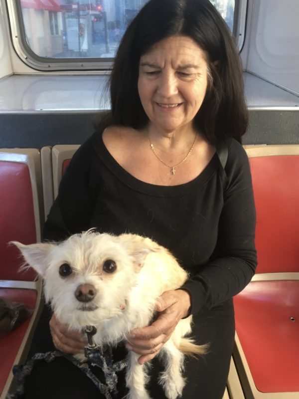 Woman Holding Scruffy White Terrier