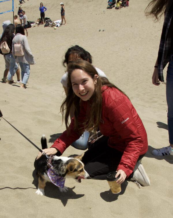 Woman Petting Pembroke Welsh Corgi Puppy On The Beach