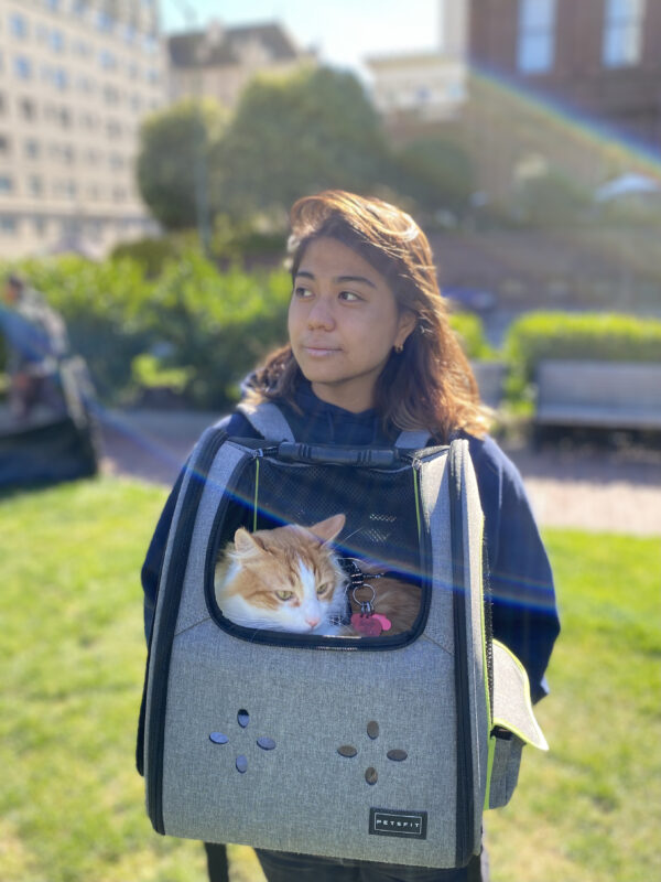 Woman With Fluffy Ginger Cat In Cat Carrier