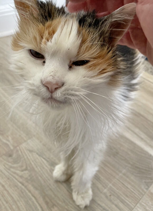 Old Cat Squinting