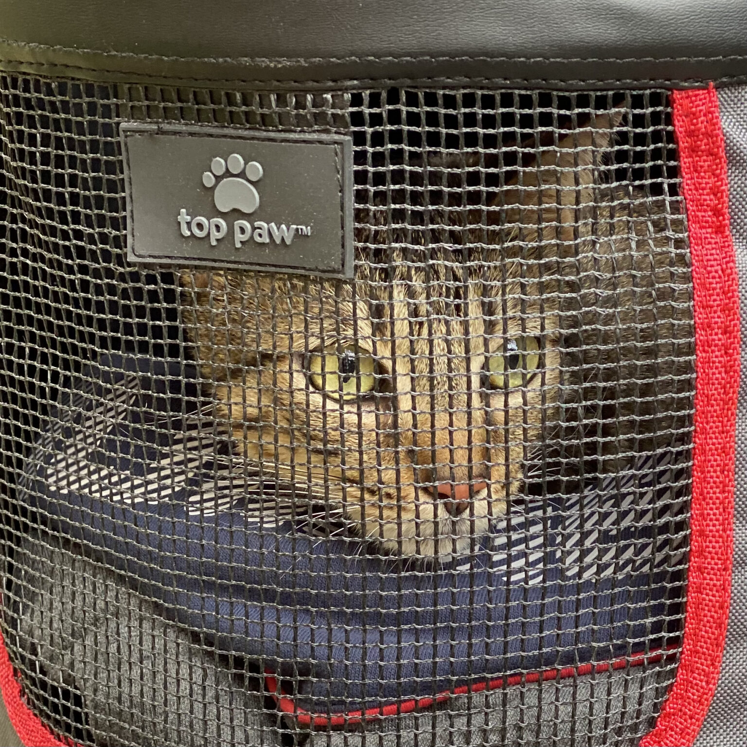 Tiger Tabby Cat In Cat Carrier
