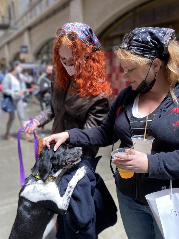 Two Women Petting Cute Dog